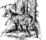 Fuchs 01
