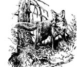 Fuchs 02