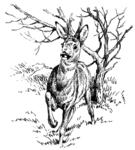 Bock 09